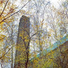 Tate Modern with Birches (CactusD) Tags: tatemodern tate modern london england greatbritain great britain gb uk unitedkingdom united kingdom film mediumformat medium format 120 hasselblad 500cm 80mmplanar 80mmf28 80mm f28 kodak portra portra800 birches trees