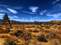 Feather Clouds (Pennan_Brae) Tags: california trees sky clouds desert joshuatree dry bluesky socal southerncalifornia barren joshuatrees cloud nature