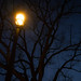 Blues for the Streetlight