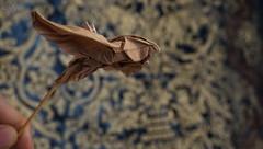 Sparrow in flew – «Pajaros, pajaritos y pajarillos» Series (Andrey Hechuev   Андрей Хечуев) Tags: origami paperfolding papiroflexia dobradura dobraduradepapel pliagedepapier papierfalten paper art paperart frompaper inpaperwetrust