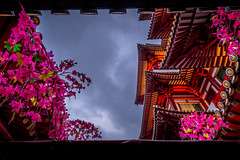 Buddha Tooth Relic Temple (Paul Ang) Tags: happyplanet asiafavorites
