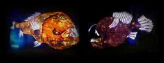 Poissons-ogre vs Baudroie abyssale (Raymonde Contensous) Tags: poissonogre baudroie poissons animauxmarins nature mer océan paris exposition océanenvoiedillumination festivaldeslumières jardindesplantes lanterneschinoises