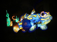 Poisson-mandarin (Raymonde Contensous) Tags: poissonmandarin animalmarin nature mer océan paris exposition océanenvoiedillumination festivaldeslumières jardindesplantes lanterneschinoises