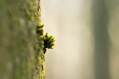 Accroché au tronc (LapinDesMontsDor) Tags: nature outside green forest macro canon 80d 100mm small mousse moss proxy light tiny tree treebark tronc