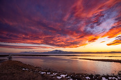 Antelope Island Sunset (1 of 1) (Jami Bollschweiler Photography) Tags: antelope island state park utah photography landscape photo tree stump sunset beautiful colorful