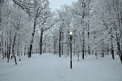 Epiphany. Palace Park in the snow. (anytime-anywhere) Tags: winter january epiphany gatchina park frost photographer nikon nikonphoto