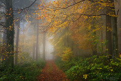 Invitation (Rita Eberle-Wessner) Tags: nature natur wald forest woods weg path nebel fog foggy neblig buche beeches atmosphere mystisch zauberwald woodland laub leaves autumn herbst buchen odenwald efeu ivy foliage fall