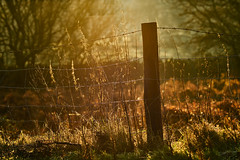 Ah, but you can't keep the sunshine out. (tonguedevil) Tags: outdoor outside countryside winter nature fence field morning colour light shadows sunlight sunrise