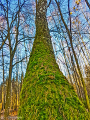 (Z. Andrzejewski) Tags: poland warmianmasurian olsztyn andrzejewski tree nature autumn fall outdoor forest woodland