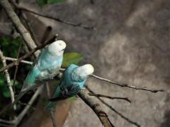higher than the birdies (SM Tham) Tags: asia southeastasia malaysia perak ipoh tambun thelostworldoftambun pettingzoo animal aviary birds tree branch