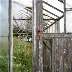 Greenhouses II - Kodak Porta 160 (magnus.joensson) Tags: phototrip01 sweden swedish skåne summer july rolleiflex carl zeiss tessar 75mm kodak porta 160 6x6 medium format c41 greenhouse