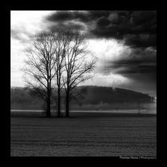 WERRA (herbert thomas hesse) Tags: hth sw bw monochrome baum landschaft werra nordhessen flussaue völkershausen wanfried