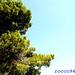 Verde/Celeste - Green/Celestial