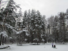 at a frozen pond (VERUSHKA4) Tags: canon europe russia moscow ville city cityscape vue view nature forest park people man woman snowman neve snow tree landscape scape pinetree branch trunk day cold season winter hiver january activity skier astoundingimage