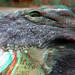 Croc Blijdorp Zoo 3D