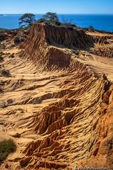 Broken Hill (Bill Bowman) Tags: torreypines pinustorreyana brokenhill torreypinesstatenaturalreserve pacificocean erosion ravenonabranch sandiego california