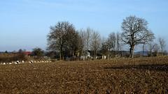 Bauernhof (dl1ydn) Tags: dl1ydn manualfocus vintagelens bauernhof landwirtschaft nature natur hof agfa solinar 75mmf35 landscape