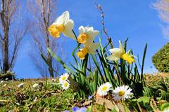 P1000335 (alainazer) Tags: marseille provence france fiori fleurs flowers parc parco park colori colors couleurs ciel cielo sky