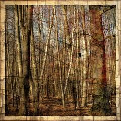 Forest (b_kohnert) Tags: outdoor trees wood forest nature painting digitalpainting digitalart