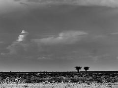 Etosha Pan (Jan-Krux Photography - thx for 5Mio+ views) Tags: etosha pan nwr namibia landscape olympus omd em1mkii olympus40150mmf28 reisen travel adventure abenteuer afrika africa landschaft clouds wolken bw baeume tree minimalist lines linien sw desert wueste barren duerr karg