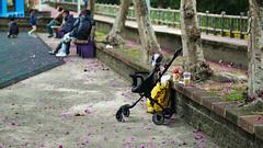 P1060144 2020-01-11 17_15_05 (宗峰) Tags: 板橋 環河公園 panasonic lumix dmc gx85 leica dg nocticron 425mm f12