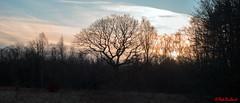 Forest Panorama1 (red.richard) Tags: trees foresy sunrise morning sky backlit silhouette nikon d800 cof093 cof093tino cof093uki cof093chri cof093dmnq cof0932007