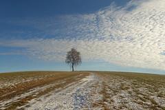 Einsame Birke (Mariandl48) Tags: birke landschaft schnee sommersgut wenigzell steiermark austria