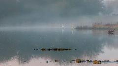Mistige morgen (ceesvg) Tags: mist nature outdoor wageningen mistig ceesvg