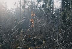 (Sietske de Graaf) Tags: pentax pentaxk50 bos woods woodland forest light