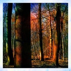 Trees - Bäume (b_kohnert) Tags: painting digitalpainting digitalart baum trees wald forest landschaft landscape nature natur