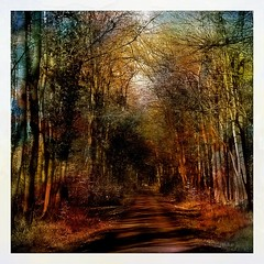 Forest road (b_kohnert) Tags: outdoor wood forestroad forest landscape nature painting digitalpainting digiart