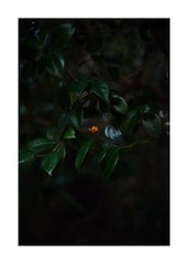 This work is 2/18 works taken on 2019/12/15 (shin ikegami) Tags: sony ilce7m2 a7ii sonycamera 50mm lomography lomoartlens newjupiter3 tokyo 単焦点 iso800 ndfilter light shadow 自然 nature naturephotography 玉ボケ bokeh depthoffield art artphotography japan earth asia portrait portraitphotography