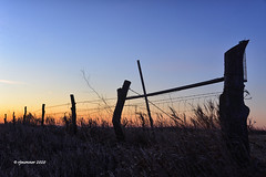 Sunrise Fence_200980 (rjmonner) Tags: agriculture agricultural agronomy agronomic aged acreage acres barbedwire country cornbelt dilapidated dormant exposed earlylight earth farm farming fence field farmland fencefriday post posts grass gate heartland history iowa sky nikon light midwest metal morning morninglight natural outdoors old quaint unique rural relic rustic sunrise vintage vanishing wire yesteryear yore