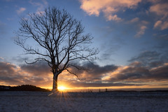 Guten morgen Sonne (Fotodesign Behrend) Tags: sun sunrise landscape natur landschaft sony alpha 7r tree baum outdoor