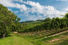 Im Wein (JBsLightAndShadow) Tags: heppenheim hessen deutschland germany bergstrase odenwald hessischebergstrase nikon nikond750 d750 tamron tamronsp2470mmf28divcusd wandern hiking hike outdoors wanderlust wein vine vines reben landschaft landscape