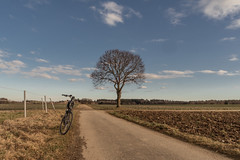 2020 Bike 180: Day 15 (suzanne~) Tags: 2020bike180 bicycle tree road country fields countryside winterride