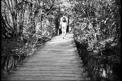Plitvice Lakes (Koprek) Tags: film analog 6x9 croatia plitvice lakes october 2019 fuji fujigw690ii brigde sun autumn ilford ilfordfilm delta 400