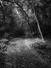 This Way (John Westrock) Tags: nature contrast forest governornelsonstatepark trees vertical wisconsin outdoors path unitedstatesofamerica nopeople trail woodlandtrail olympus1240f28 olympusomdem1mkii m43 microfourthirds