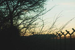 Branches (Tzvlf) Tags: branches ramas three threes forest wald bosque aeropuerto airport fance valla cerca sunset atardecer