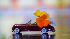 get nature in your home - 7985 (✵ΨᗩSᗰIᘉᗴ HᗴᘉS✵90 000 000 THXS) Tags: smileonsaturday getnatureinyourhome toy miniature car automobile old flora flower macro smile belgium europa aaa namuroise look photo friends be yasminehens interest eu fr party greatphotographers lanamuroise flickering challenge