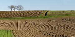 Champs en hiver (jc.petitjean) Tags: champs fields hiver winter auvergne france