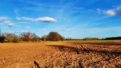 Par une belle après-midi de janvier à Sélestat (mamietherese1) Tags: earthmarvels50earthfaves world100f