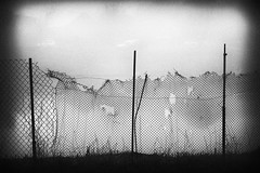 old fence, street decay (Pomo photos) Tags: fence decay urbex urban city abandoned lowlight abstract abstraction xe2 fujifilmxe2 surreal noir metal grass blackandwhite blackwhite bw monochrome mono grain fog mist misty cityscape street vignette hole holes rust old stick