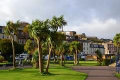 (Zak355) Tags: rothesay isleofbute bute scotland scottish palmtrees