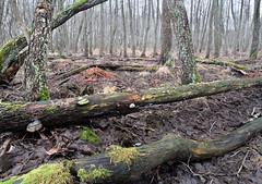Land of woodpeckers (Kimmo Järvinen) Tags: forest wood woods cloudy metsä gray grey maisema landscape nature circularpolarizer polarizer nikon d500 tokina tokina1116mmf28 tokina1116mm atx116prodx suomi finland helsinki filter luonto