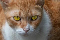 Piercing eyes (N808PV) Tags: m50 piercing eyes