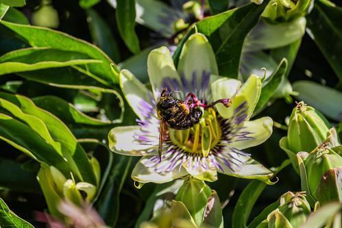 Bumble Bee 03