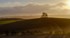 Brightwell (littlenorty) Tags: brightwellbarrow colour england europe landscape lone longwitenham nature oxfordshire plants sun sunrise type unitedkingdom tree