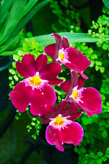Orchids (SKS Photos) Tags: orchids plants green red white leaves beautiful