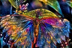 Butterfly Dream (LotusMoon Photography) Tags: butterfly colorful digital artistic art artwork artsy postprocessed manipulated deepdream ddg dreamlike vividcolor vivid vibrant bright brilliant fascinating annasheradon lotusmoonphotography sliderssunday hss slide superslide manipulation max delightful delight visualdelight technicolor